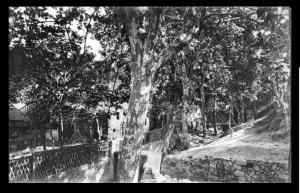 torrent-dels-tarongers-sota-de-la-font-trobada-branguli-1910-arxiu-nacional-de-catalunya